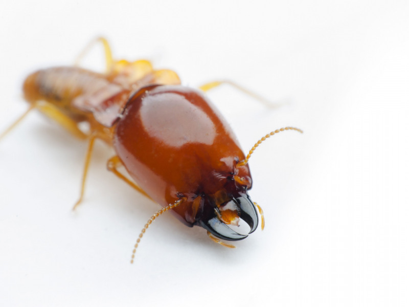Hidden Evidence of Termite Infestation in Your Home