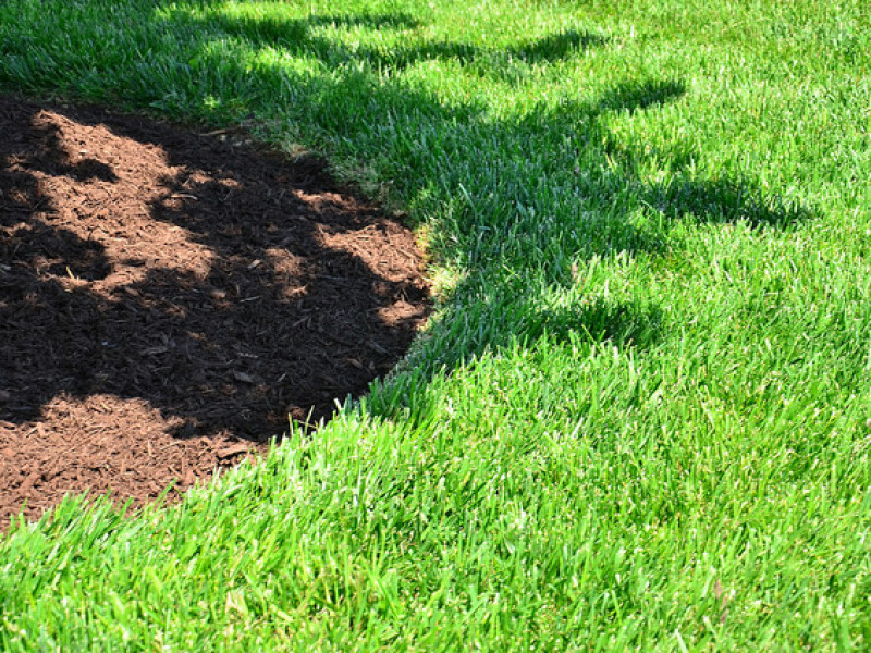 When Should You Fertilize Your Yard Mesmerizing Faq When Should You  Fertilize Your Yard Inspectall Services