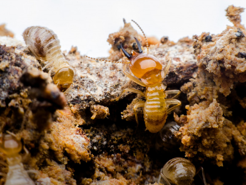 Why Regular Termite Inspections Are Important