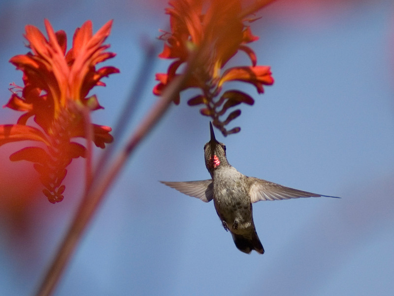 Top 5 Plants to Attract Hummingbirds to Your Yard