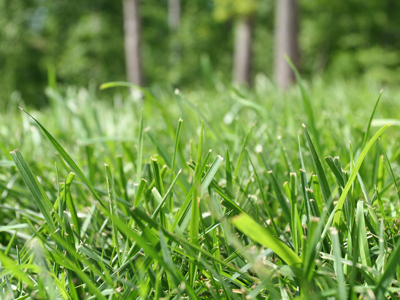 Benefits Of Growing Bermuda Grass Inspect All Services