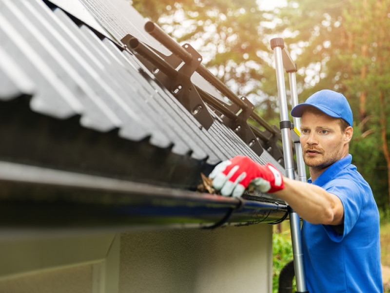 What You Should Know about Pests in Gutters