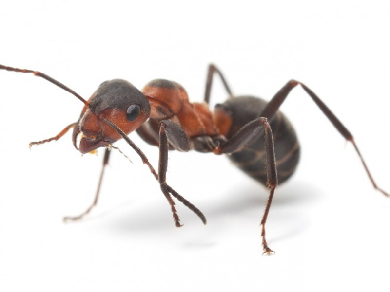 Identifying the Signs of Ants in Your Home