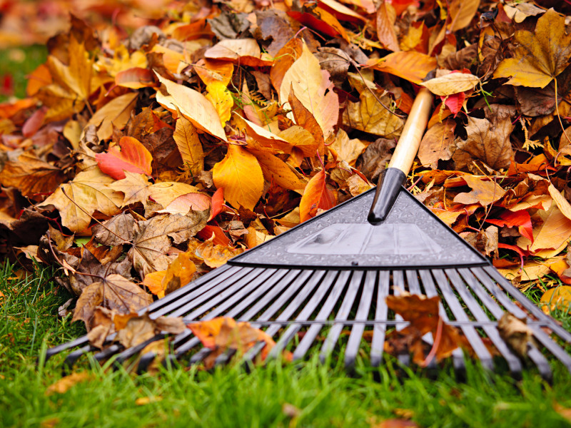 Preparing Your Yard for Fall