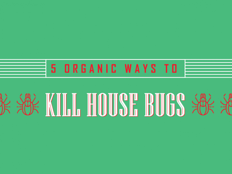 5 Organic Ways to Kill House Bugs