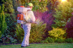 Pest Control: 5 Reasons You Shouldn't Do Your Own