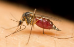 Why Mosquitoes Bite Some People More Than Others