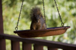 How Squirrels Can Damage Your Home