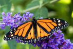 Pollinators: You Can't Live Without Them