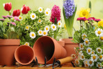 Plant These 3 Annual Flowers for the Most Beautiful Color Bowl