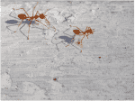 Fire Ants: What Florida Homeowners Need to Know