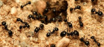 Florida Pests to Watch for in Spring and Summer Months