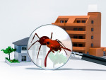 Importance of Pest Inspection when Buying a Home