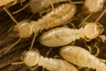 5 Signs You May Have Termites