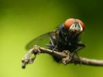 Common Fall Pests in Atlanta