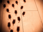 How Weather Can Affect Pest Infestation in Your Homes