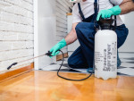 Tips for Choosing the Best Pest Control Service
