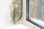 Importance of a Mold and Air Quality Test