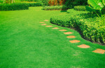 Understanding Soil pH and Your Lawn