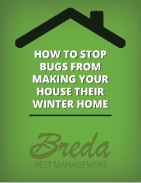 How to Stop Bugs from Making Your House Their Winter Home
